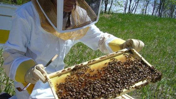 Worker B beekeeper